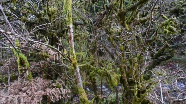 mixed woodland in ayrshire. - david johnson stock videos & royalty-free footage