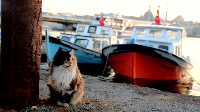 Mixed-breed cat in Karaköy port