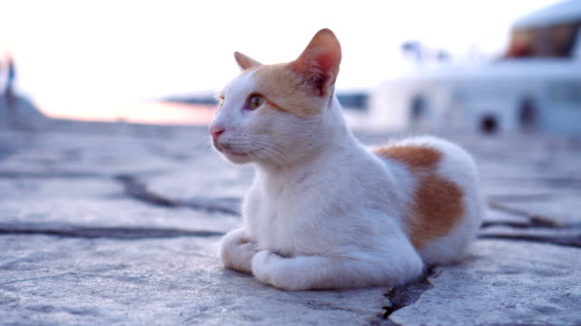 Mixed-breed cat laying down on concrete floor