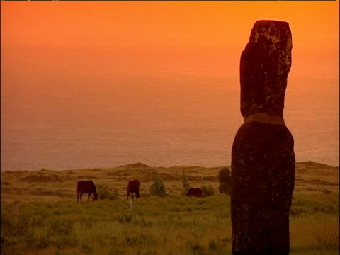 stockvideo's en b-roll-footage met moai stone statue with horses grazing in background easter island - paardachtigen