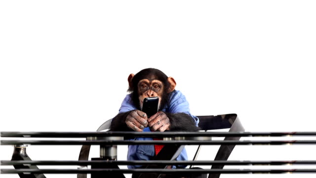 Handy Chimp