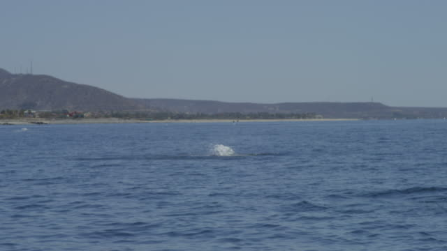 mobula ray leaping from water close to camera with shoreline in background - バハカリフォルニア点の映像素材/bロール