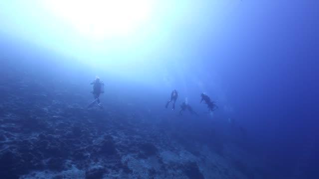 vídeos de stock e filmes b-roll de mobula ray on the reef - aqualung diving equipment