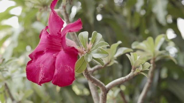 vídeos de stock e filmes b-roll de mock azalea flower - estame