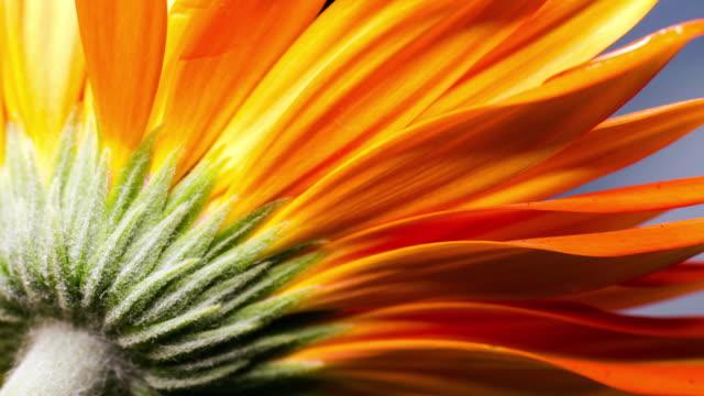 vídeos y material grabado en eventos de stock de moco_macro - naranja color
