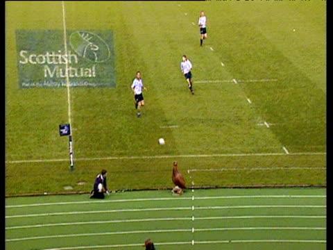 vídeos de stock e filmes b-roll de model grouse mascot hit on head by rugby ball and knocked over, scotland vs romania, international friendly, murrayfield, edinburgh; 09 nov 02 - etapa desportiva