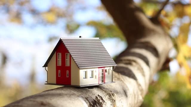 vídeos de stock, filmes e b-roll de casa modelo em galho de árvore - ramo parte de uma planta