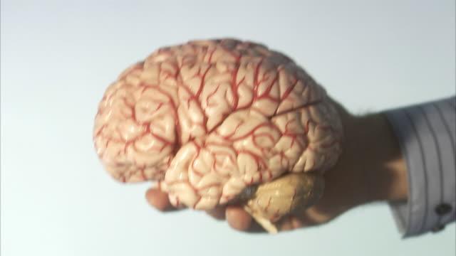 vidéos et rushes de model of a human brain. - santé mentale