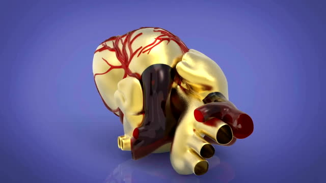 model of artificial human heart 3d rendering - ventricolo cardiaco video stock e b–roll