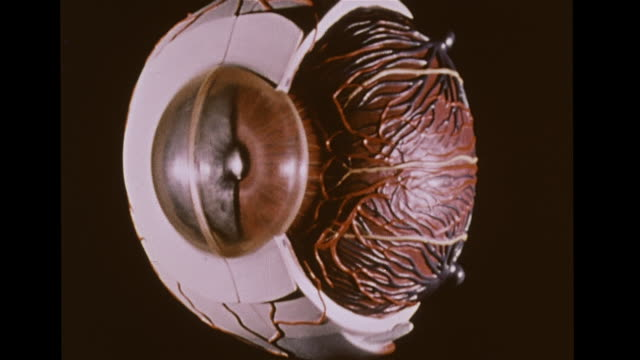Model of human eye on black BG nerves cornea pupil iris retina lens Optometry ophthalmology sight