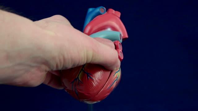 modell des menschlichen herz - aorta stock-videos und b-roll-filmmaterial