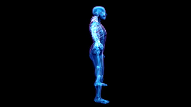 A model of the human skeleton in an x-ray style is rotated as the camera slowly zooms in.
