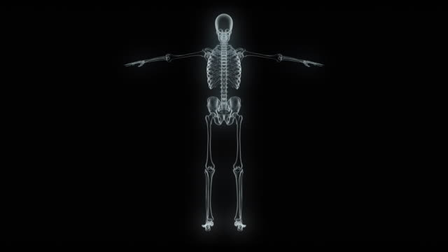 model of x-ray human sceleton - the human body stock videos & royalty-free footage