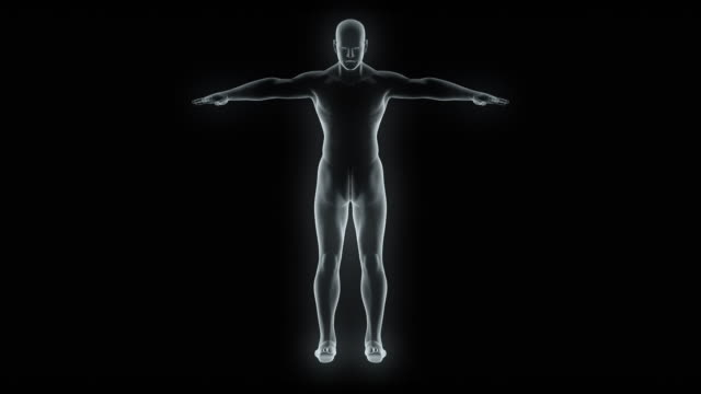 model of x-ray male body - torso stock videos & royalty-free footage
