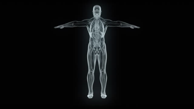 model of x-ray male body - biomedical illustration stock videos & royalty-free footage