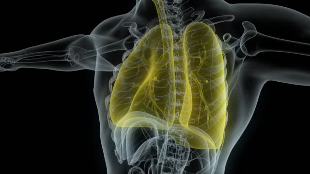 model of x-ray male body with yellow lungs - biology stock videos & royalty-free footage