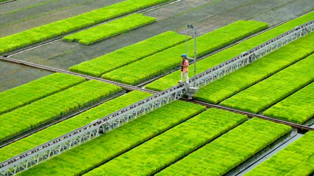 modern agriculture innovation automatic system sprinkler spray water to sprout tree. modern farm. spray water to the yard ground automatically. smart farmer using technology to increase productivity - agriculture stock videos & royalty-free footage
