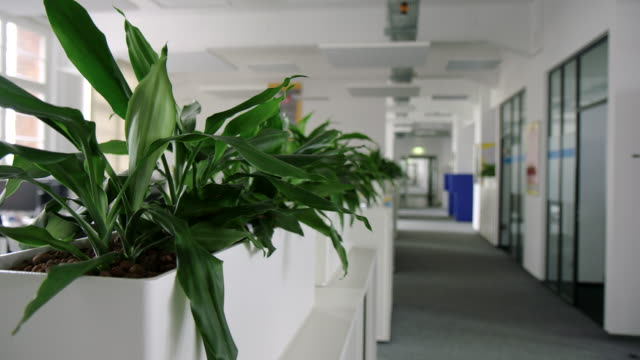 modern business office space with plants - corridor stock videos & royalty-free footage