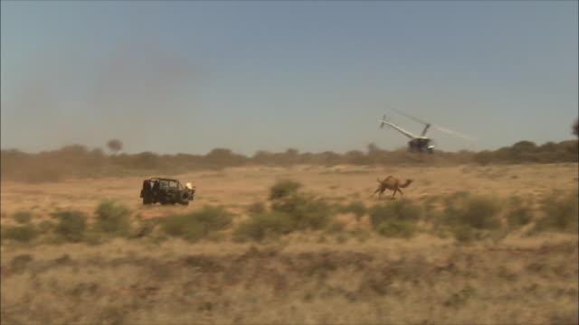 vidéos et rushes de modern camel herding in australia 03 - australie
