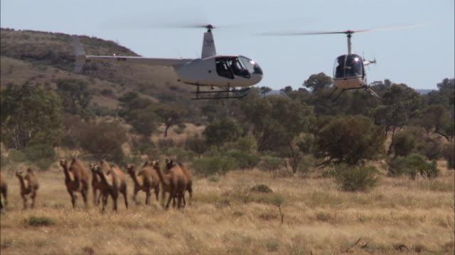 modern camel herding in australia 2 - camel stock videos & royalty-free footage