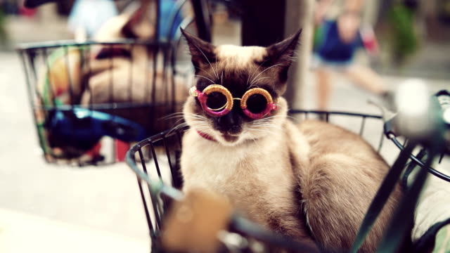 modern cat wearing cool eyeglasses - occhiali da vista video stock e b–roll