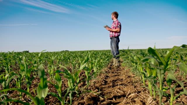 vídeos de stock, filmes e b-roll de ws ds moderno agricultor usando um tablet digital - campo