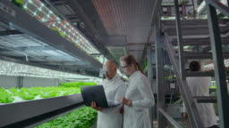 Modern farmers of the future monitor the growth of plants and grow pure non-modified natural products in vertical farms with hydroponics