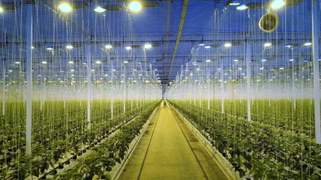 modern greenhouse - netherlands stock videos & royalty-free footage