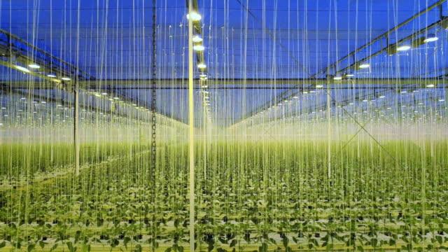 modern greenhouse - gewächshäuser stock-videos und b-roll-filmmaterial
