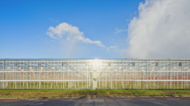 modern greenhouse - plant nursery stock videos and b-roll footage