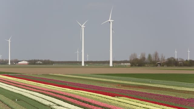 modern take on the classsic image of tulip fields and windmills, a wind farm and tulip fields near almere, flevoland, netherlands. - plant bulb stock videos & royalty-free footage