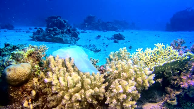 modern times symbol. plastic bag on the coral reef - bag stock videos & royalty-free footage