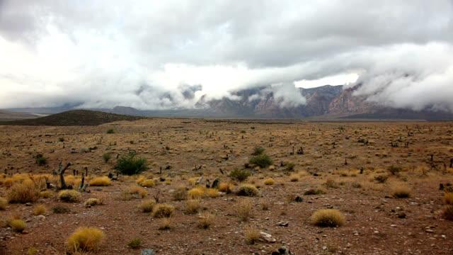 mojave desert after rain - deserto mojave video stock e b–roll