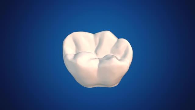 vídeos de stock, filmes e b-roll de molar - saúde dental