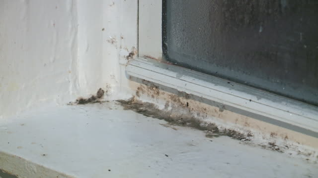 wgn mold grows on walls and window sills in a home in chicago on dec 25 2017 - fungal mold stock videos & royalty-free footage
