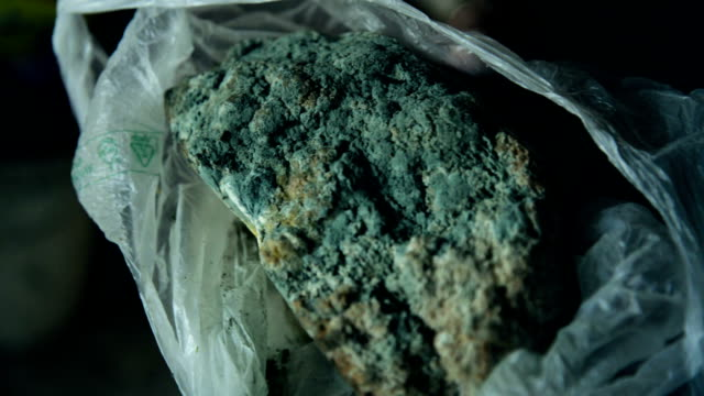 Moldy loaf of bread