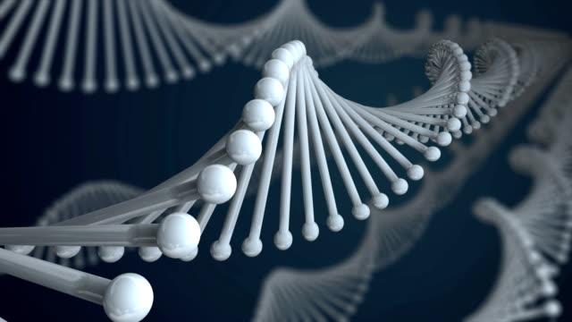 DNA Molecule Loop