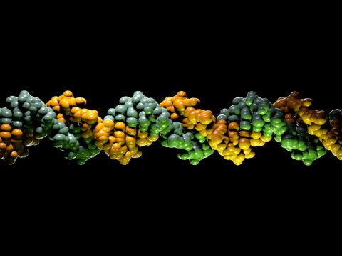 dna molecule model - pal - biochemistry stock videos & royalty-free footage