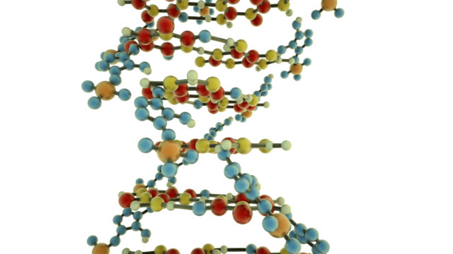 dna molecule - helix model stock videos and b-roll footage