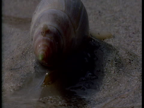 a mollusk inches through wet sand. - wet wet wet stock videos & royalty-free footage