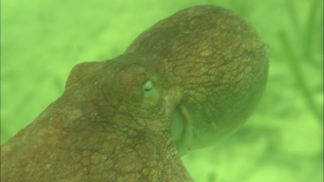 a mollusk swims in green water. - mollusk stock videos & royalty-free footage