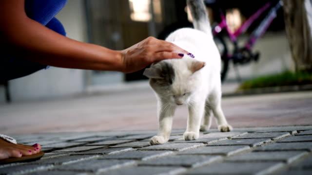 vidéos et rushes de chat de molly - grèce