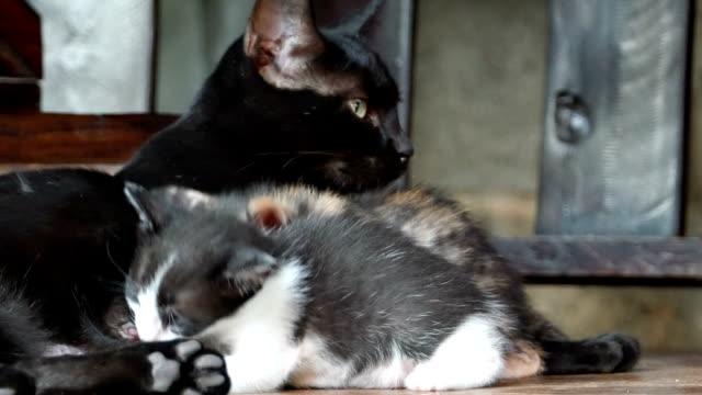 Mom cat feeding her kittens