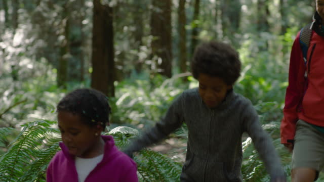 mom hikes with son and daughter in a forest - tree area stock videos & royalty-free footage