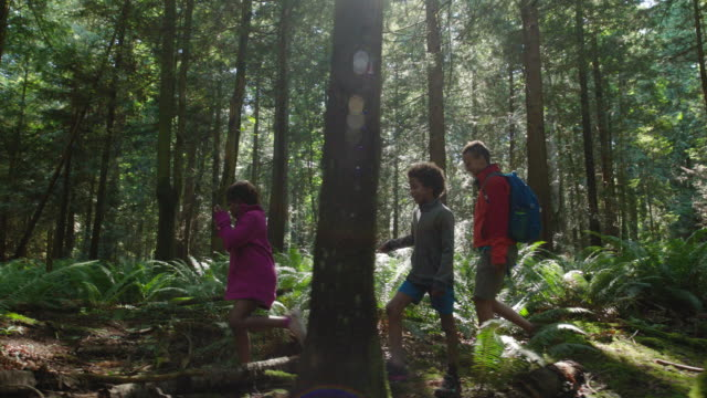 mom hikes with son and daughter in a forest - carefree stock videos & royalty-free footage