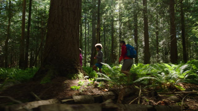 mom hikes with son and daughter in a forest - childhood stock videos & royalty-free footage