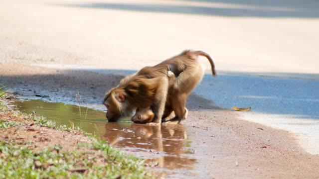 Mom Monkey and baby at khao yai national park