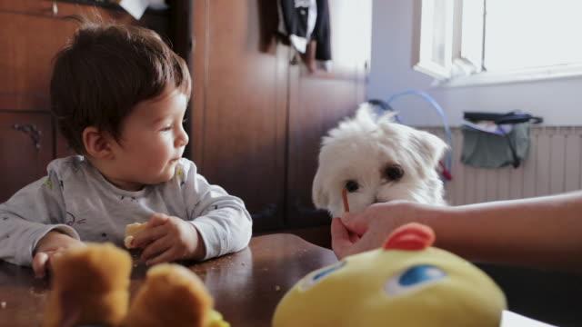 vidéos et rushes de maman nous nourrit ! petit garçon mignon et son crabot mangeant des casse-croûte dans le salon - mordre