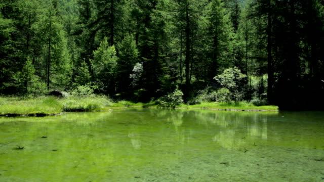 vídeos y material grabado en eventos de stock de lago monal - pinaceae