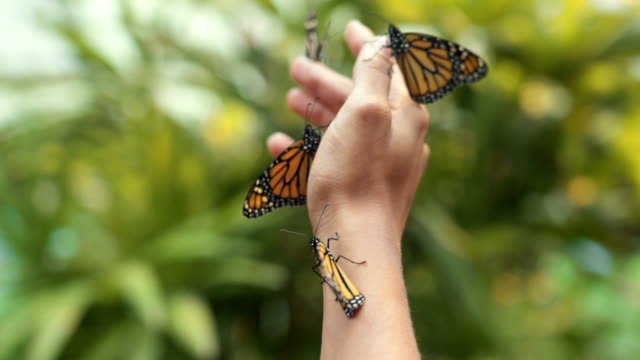 monarch butterflies on a hand with lush green background - lepidottero video stock e b–roll